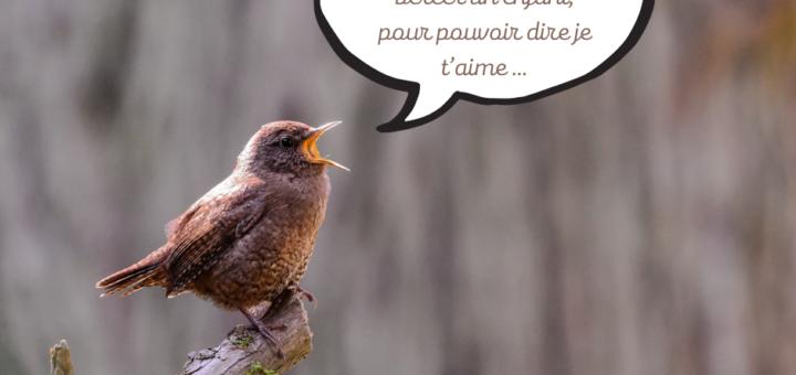 oiseau Pagny